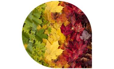 Vivaldi's Four Seasons Recomposed - Poster