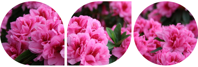 Spring Serenade Website Header2